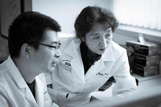 Dr. Ling Wang awarded DOD grant to study Breast Cancer Brain Metastases